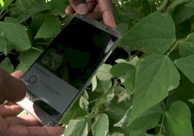 AI helps farmers